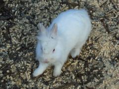 45ウサギ