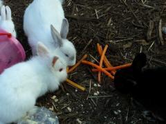 46ウサギ