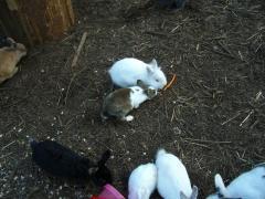 47ウサギ