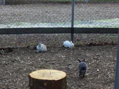 48ウサギ