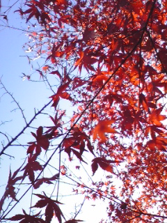 PA0_0004_20081114204100.jpg