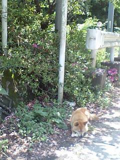 20090509甲武頂上の犬.JPG