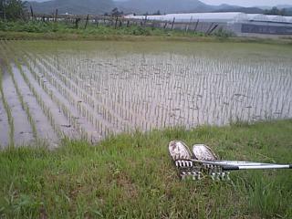 20090610実家11.JPG