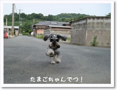 reno-1_20090613233514.jpg