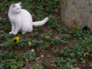 イスタンブールの猫2