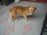 カッパドキアの犬1