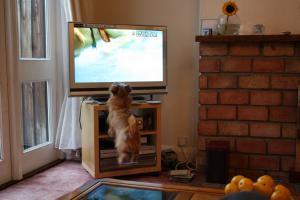 TVにジャンプ
