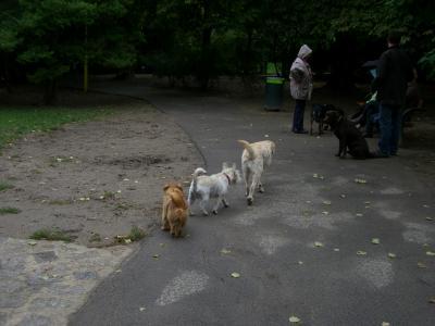 090829 Dog Zone (3)