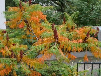 玄関前の木