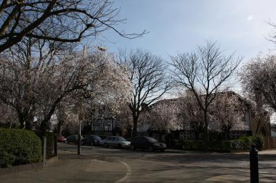 自宅近辺の春