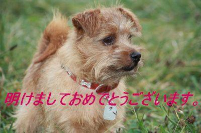 IMG_4013s.jpg