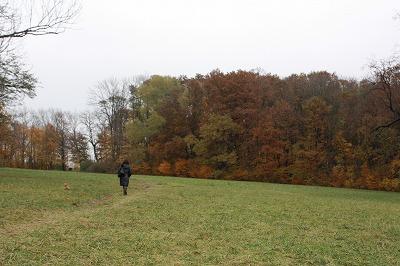 広大な草原と紅葉