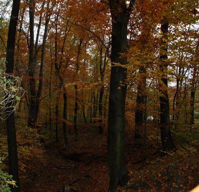 ウィーンの森の紅葉