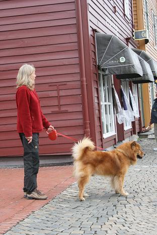 ベルゲン犬①