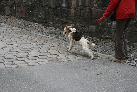 ベルゲン犬②