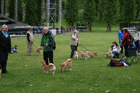 ベルゲン犬③