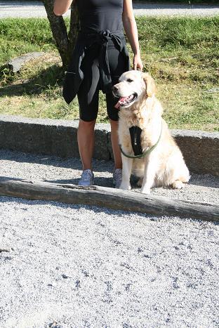 ベルゲン犬⑫