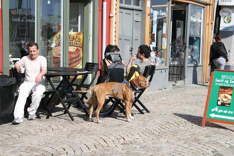 ベルゲン犬⑬