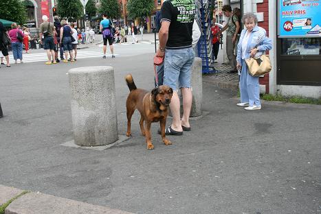 ベルゲン犬⑭