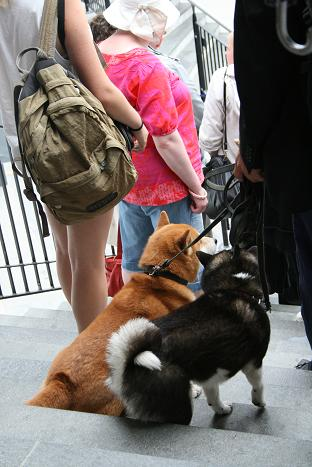 ベルゲン犬⑯