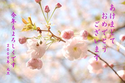2009年WEB用桜年賀状