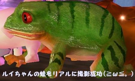 Gメン ルイちゃんの蛙