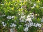 白い花090330