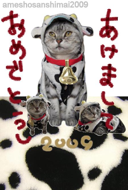 2008-4_20090101132228.jpg