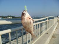金沢港釣り人公園