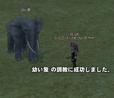 象調教成功
