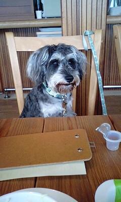 カフェで待ってるアンコ