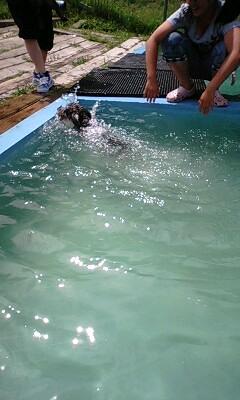溺れるアンコ
