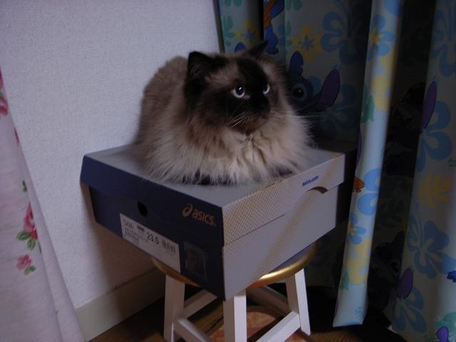 箱があるところにゎみちゅがいる