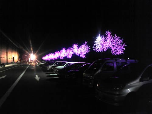 木がピンク
