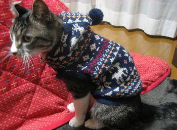 冬はセーター。