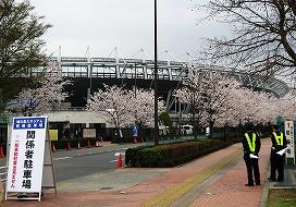 080330味スタ周辺桜11