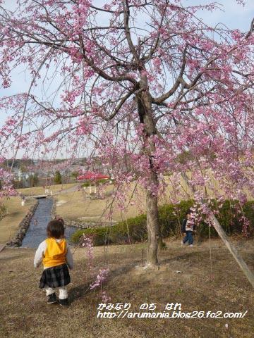 桜とコムスメ