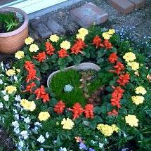 0905花