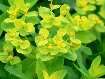 黄色い小さい花