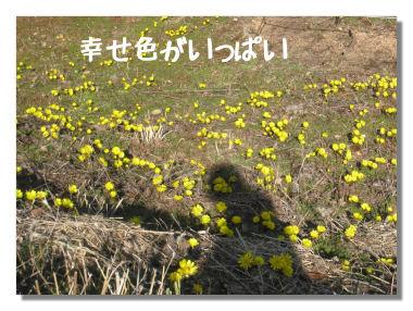 fukujyusou001.jpg