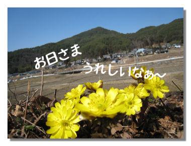 fukujyusou02.jpg