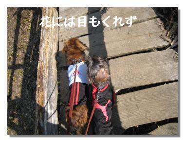 fukujyusou03.jpg
