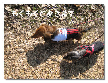 fukujyusou04.jpg