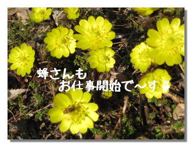 fukujyusou06.jpg