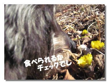 fukujyusou2.jpg
