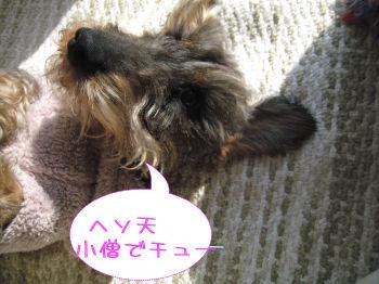 hesokozou2.jpg