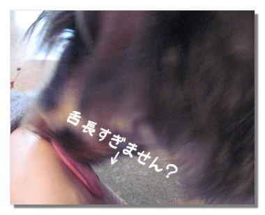 huyumodori7.jpg