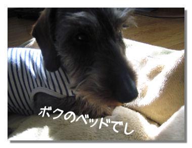 nawabari05081.jpg