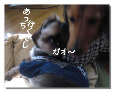 nawabari05083.jpg
