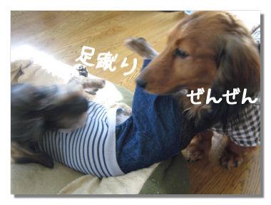 nawabari05084.jpg
